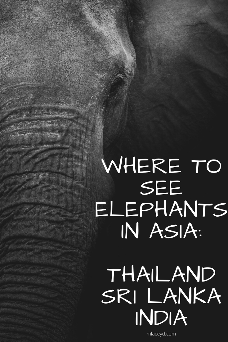 where to see elephants in thailand, sri lanka, india